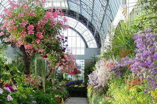 зимний сад: